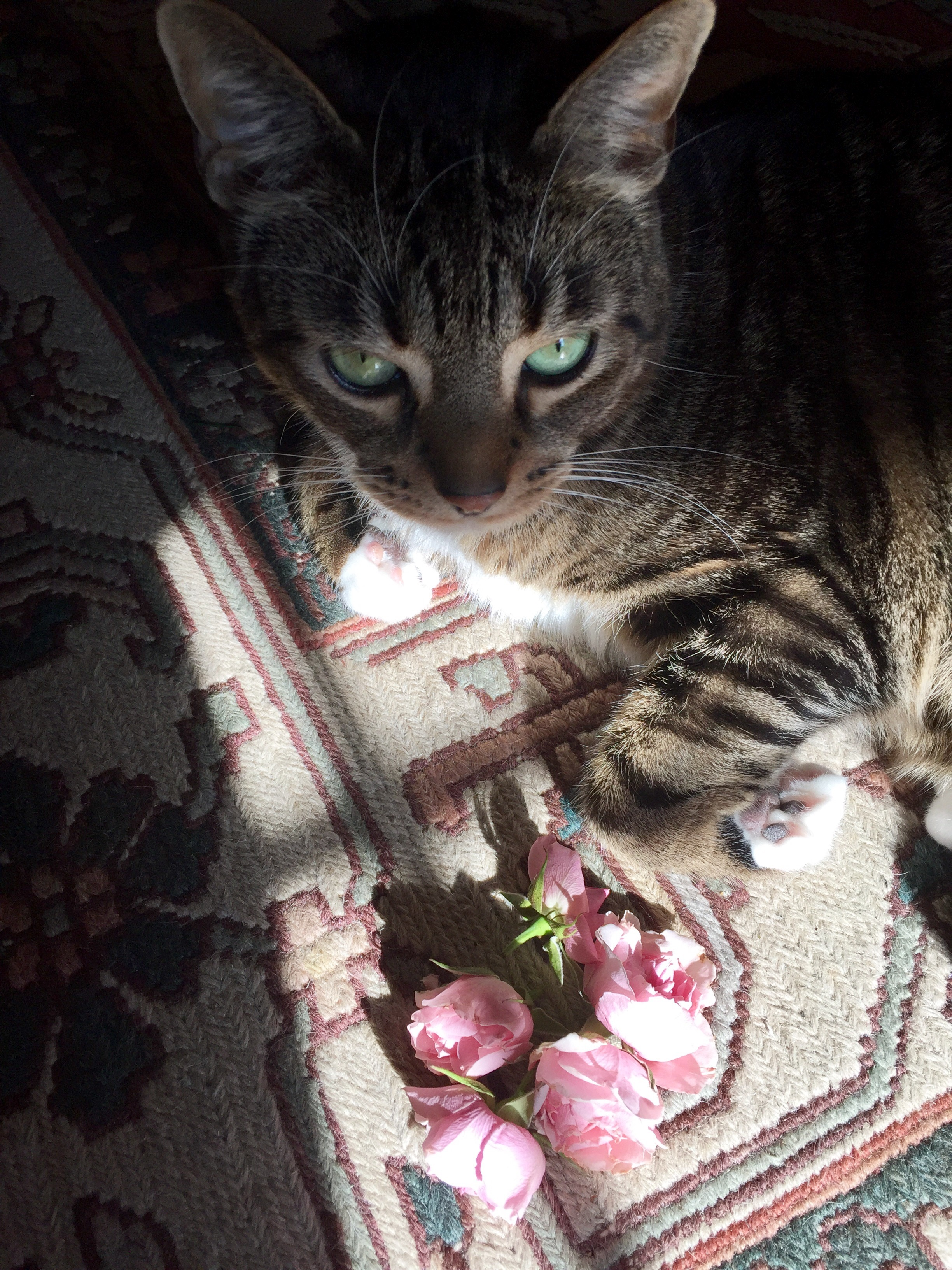 Beauty beginnings chocolate aristocrat my cat mr pickle usually investigates the flowers after they have shared their beauty and fragrance i squeeze out as much value as possible by sometime izmirmasajfo Choice Image